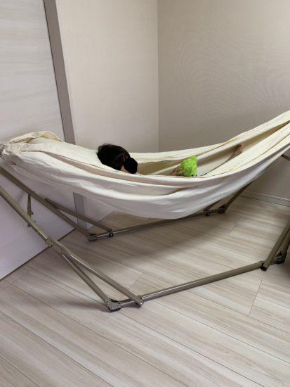 息子がハンモックに寝ている写真です